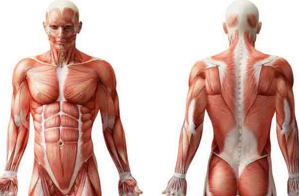 علتهای لرزش عضلات در ورزش