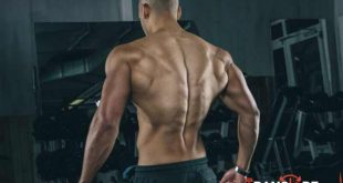 the-best-exercises-to-strengthen-the-lower-back-fillets